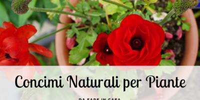 3 Concimi naturali fai da te per piante